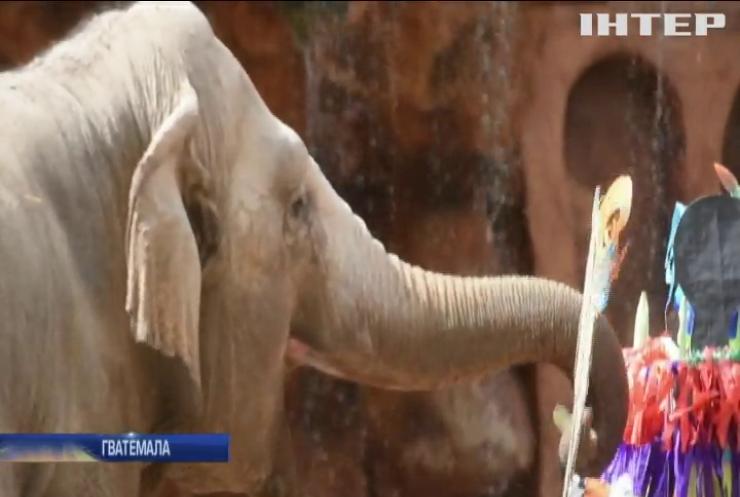 У гватемальському зоопарку привітали з днем народження слониху