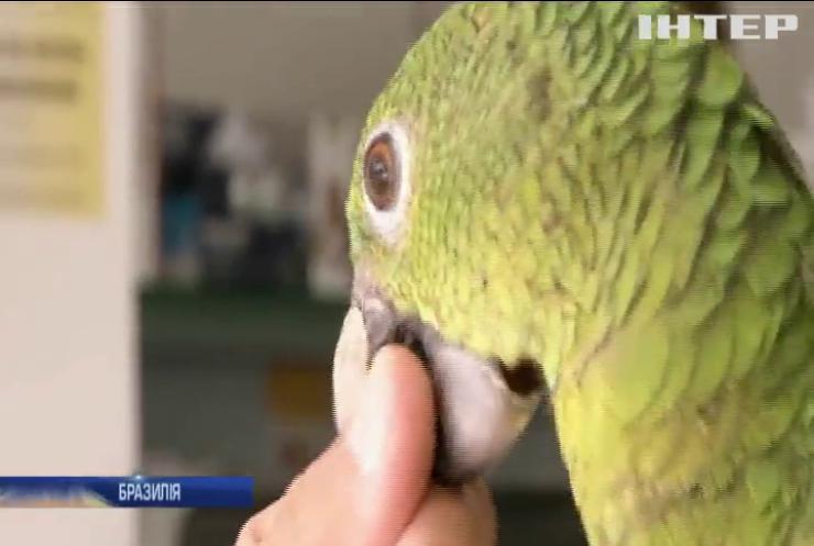 Бразильські ветеринари виготовляють протези для травмованих птахів