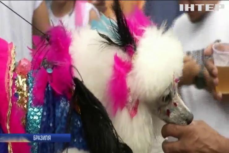В Ріо-де-Жанейро до карнавалу приєднались домашні улюбленці