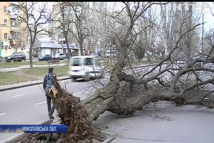 Знесені дахи та повалені дерева: чи повернеться миколаївський циклон