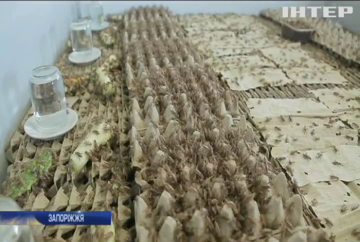 У Запоріжжі мешканці багатоповерхівки судитимуться через тарганів