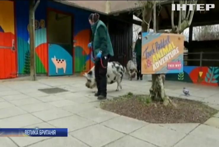 Лондонський зоопарк вперше залишився без відвідувачів з часів Другої світової війни