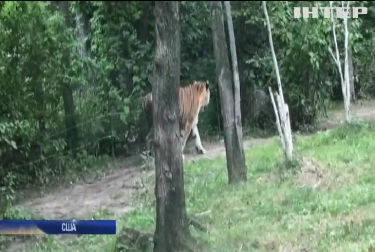 У зоопарку Нью-Йорка тигриця захворіла на COVID-19
