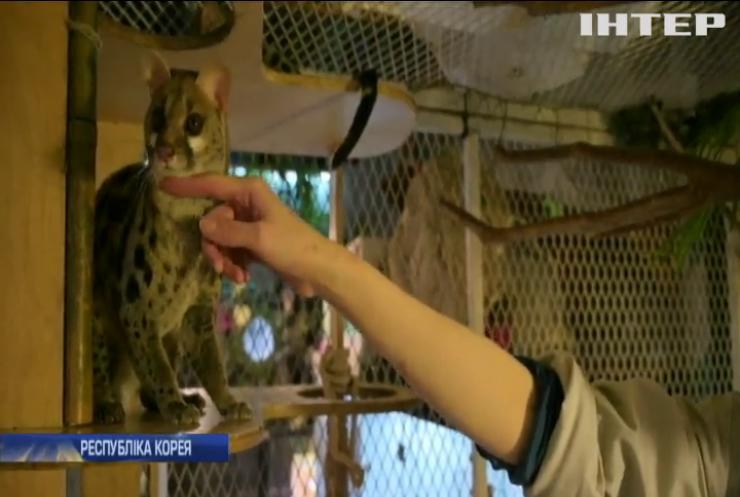 У Південній Кореї перетворили на зоопарки зоо-кафе