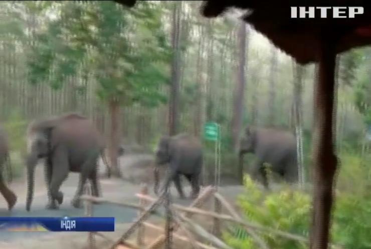 В Індії спорожнілими вулицями вешталися слони