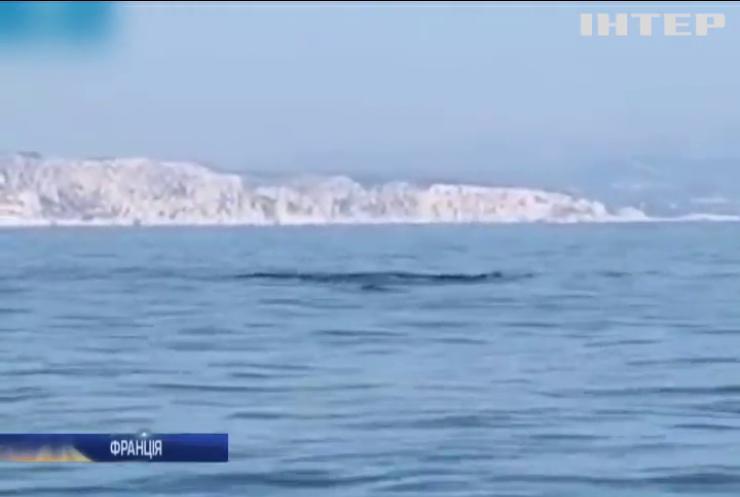 До узбережжя Франції припливли кити-фінвали
