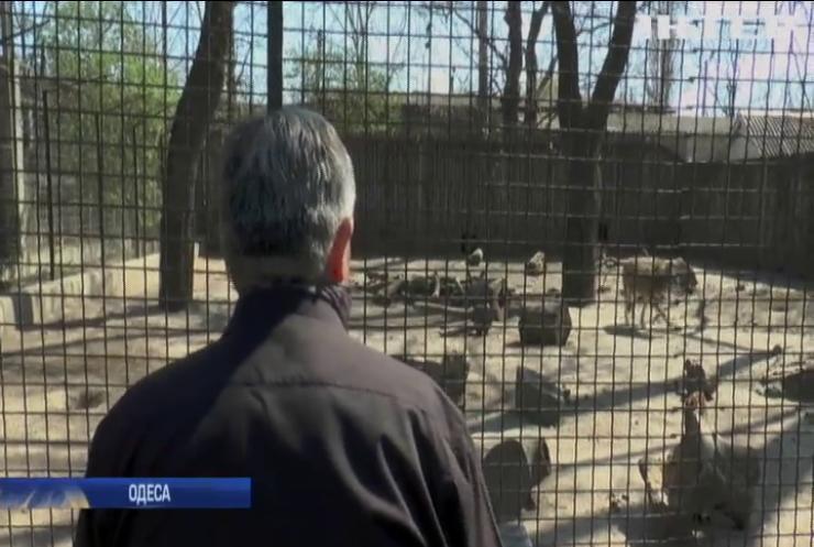 В Одеському зоопарку розважають тварин класичною музикою