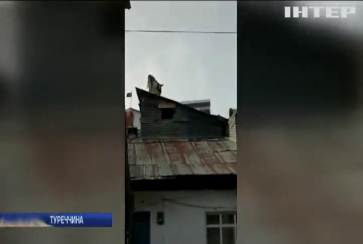 У турецькому селі корова залізла на дах будинку