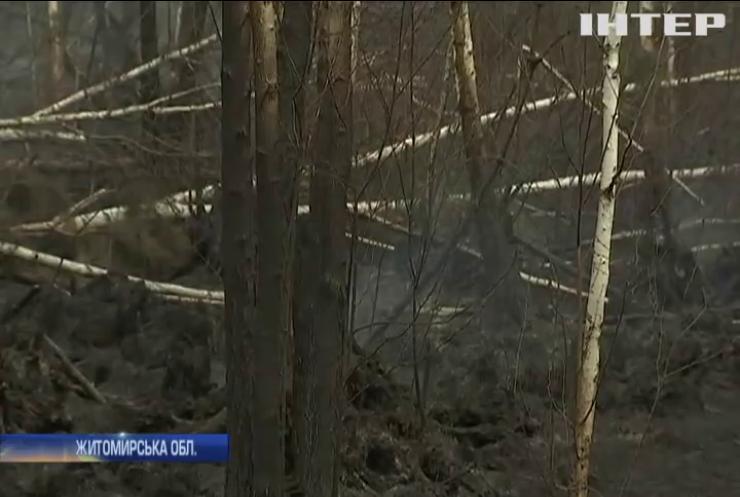 На Житомирщині спалахнула масштабна лісова пожежа