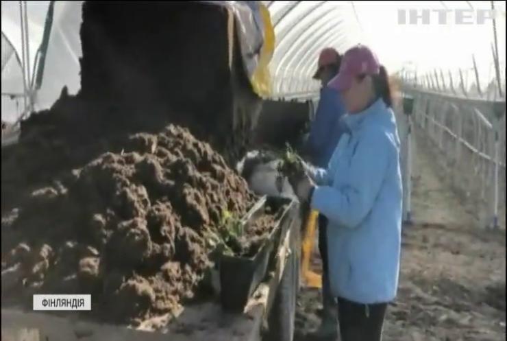 Армія безробітних: Європа сумує за українськими заробітчанами