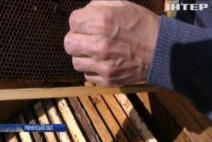Масова загибель бджіл: хто поставив під загрозу врожай меду на Рівненщині