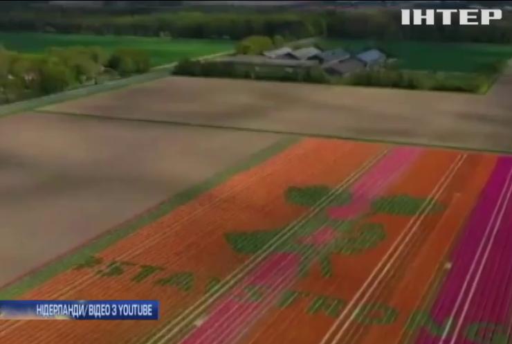 """""""Залишайтеся сильними"""": медикам присвятили новий сорт тюльпанів"""