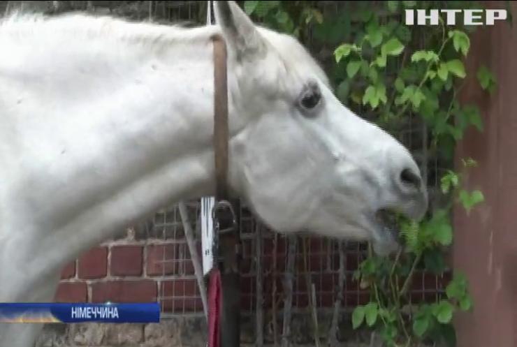 Спорожнілими вулицями Франкфурта гуляє білий кінь