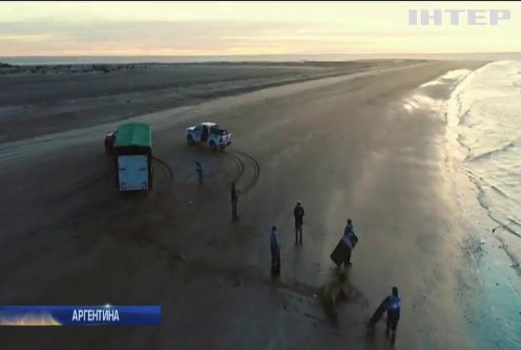 В Аргентині прогнали з пляжу морського слона