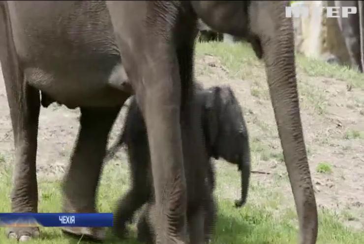 Празький зоопарк показав маленьких слоненят