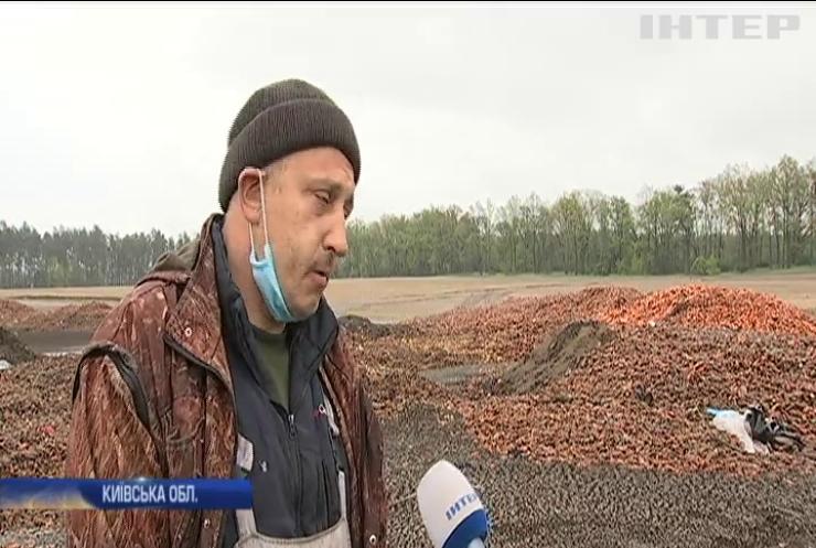 Фермери позбуваються врожаю: тонни моркви гниють у полі під Києвом