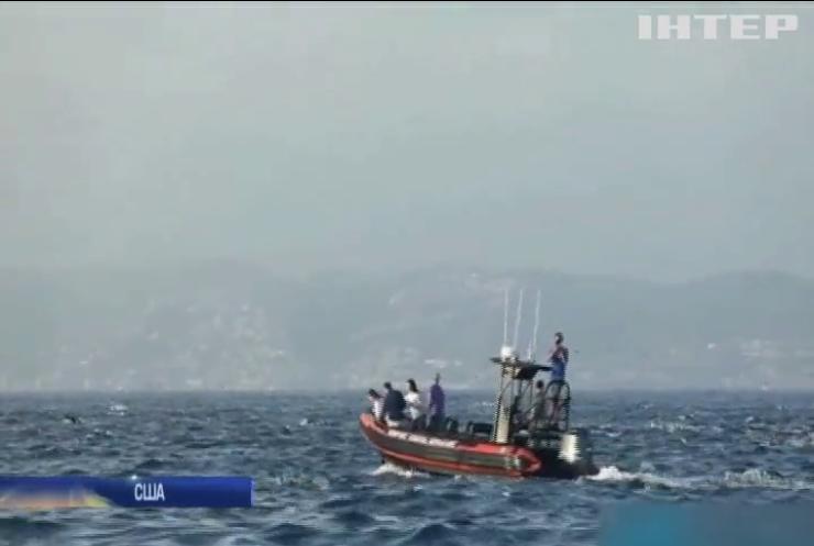 Тисячі дельфінів прямують до узбережжя Каліфорнії (відео)
