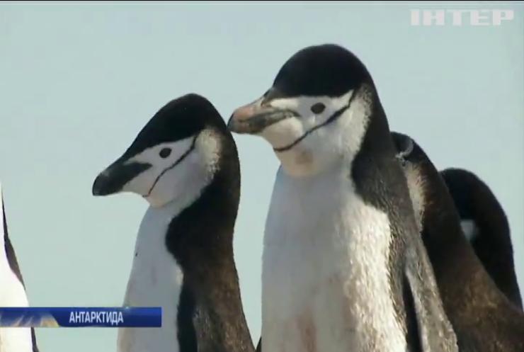 Антарктида позеленіла через глобальне потепління