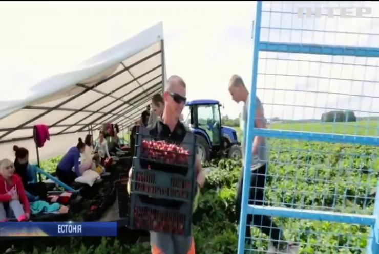 Естонські фермери просять пустити до країни українських заробітчан