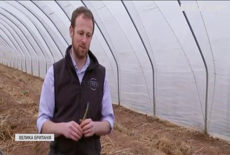 Європа потерпає без заробітчан: на полях нікому збирати врожай