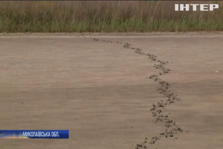 Аномальна посуха: на Миколаївщині дикі орхідеї опинились під загрозою