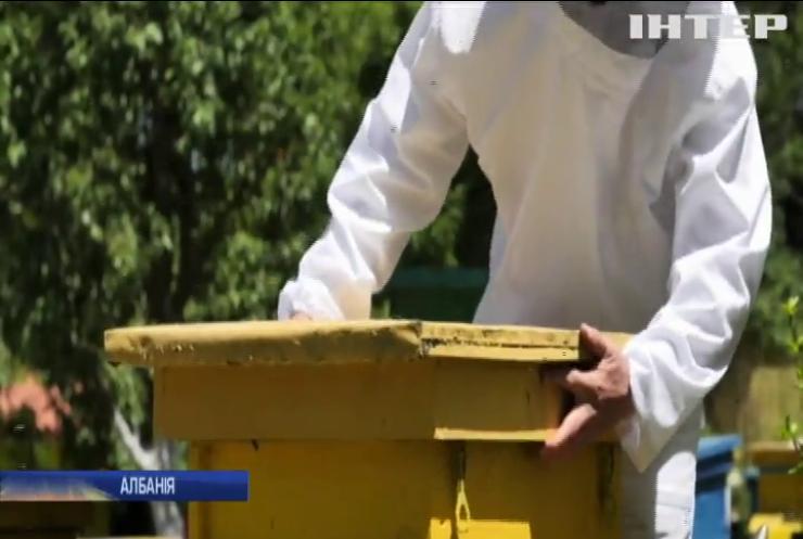 Албанці дякують коронавірусу за майбутній врожай меду