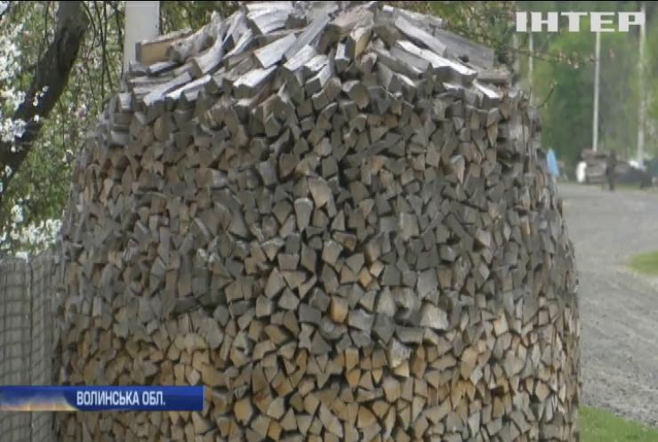 На Волині правоохоронці борються з вирубуванням цінних дубів