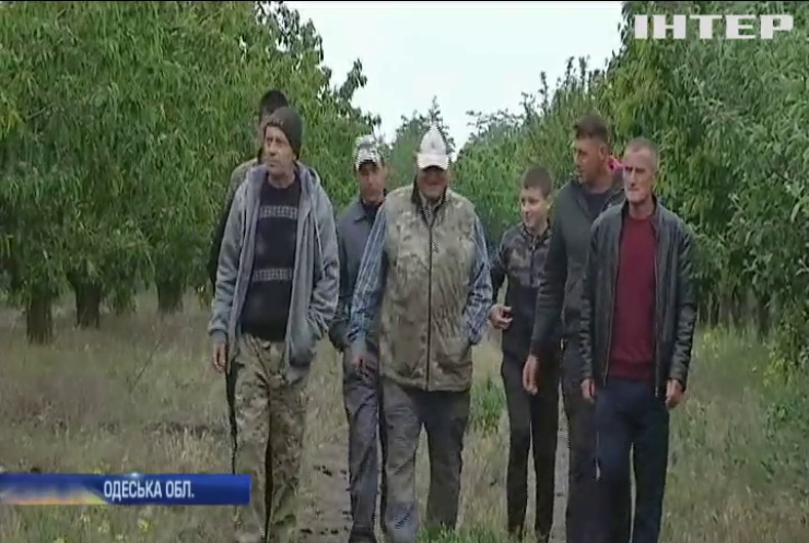 Урожай черешень та персиків в Україні опинились під загрозою