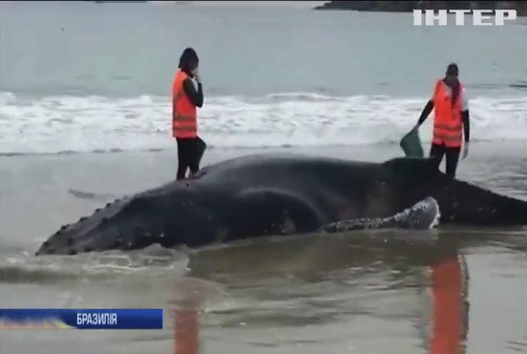 У Бразилії врятували кита, якого викинуло на пляж