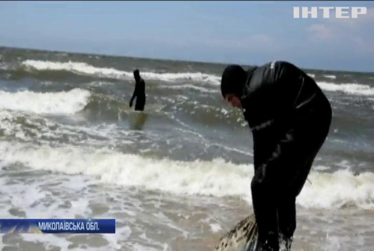 Очаківські пляжі очистили від десятків кілограмів сміття