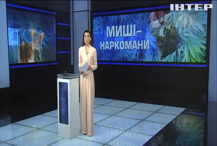 """Миші-наркомани з'їли у суді Тернополя 7 грамів """"речових доказів"""""""