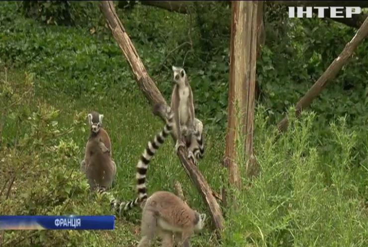 Зоопарк Парижу радуватиме туристів новими мешканцями
