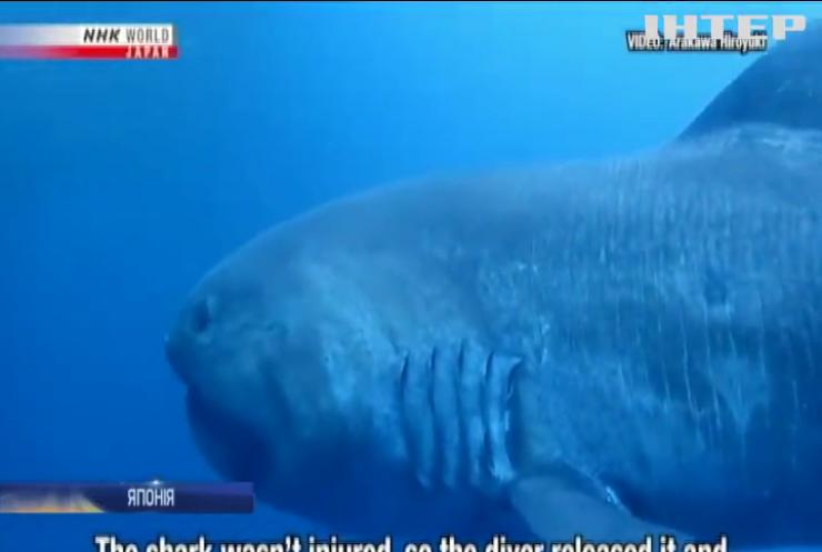 Рідкісна акула потрапила у сітки японських рибалок (відео)