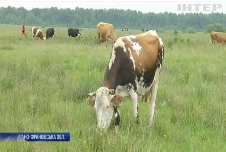 Чому Україна втрачає ринки збуту молочної продукції?
