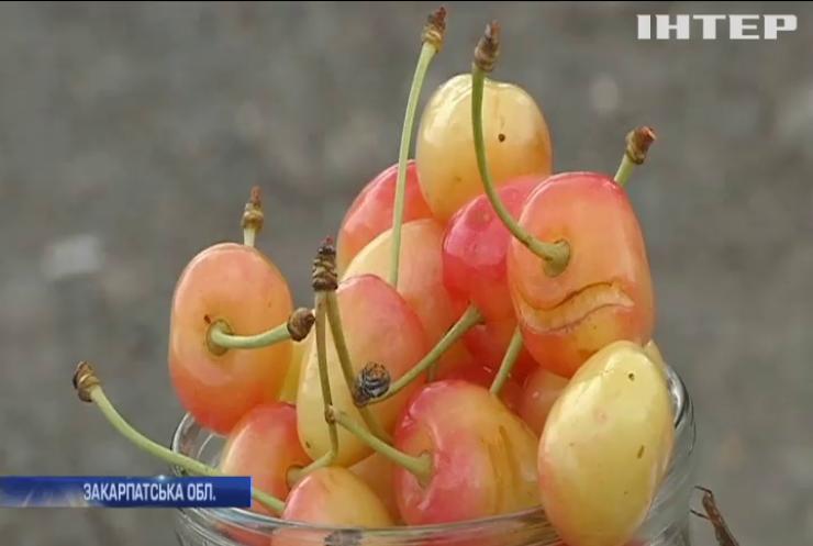 Ціни на ягоди в Україні побили всі рекорди