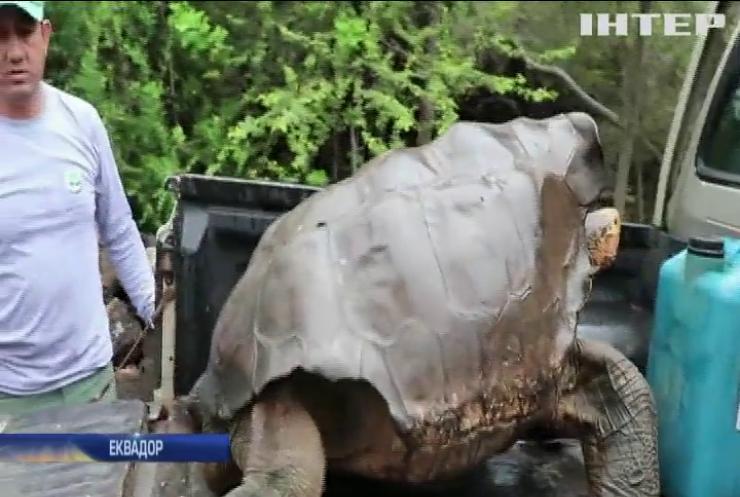 Черепаху-спасителя випустили на волю