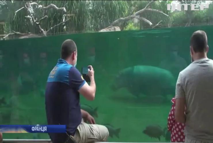 У Франції маленька бегемотиха відкрила сезон купання в зоопарку