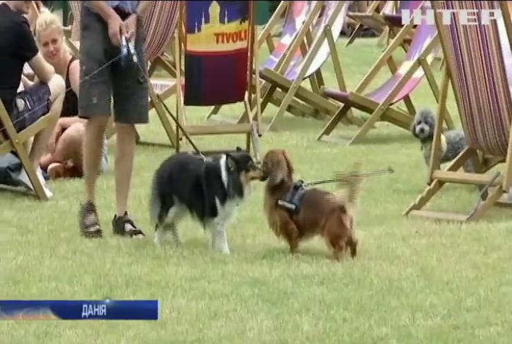 День собак у Копенгагені відсвяткували у парку розваг