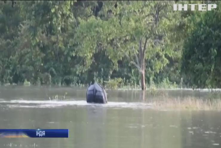 В Індії затопило домівку носорогів