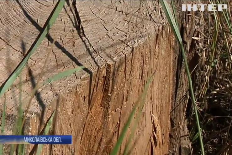 На Миколаївщині знищують захист полів від суховіїв