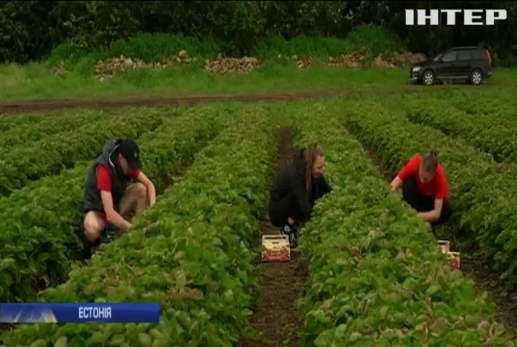 """Кінець """"полуничній війні"""": Естонія дозволила в'їзд сезонним робітникам"""