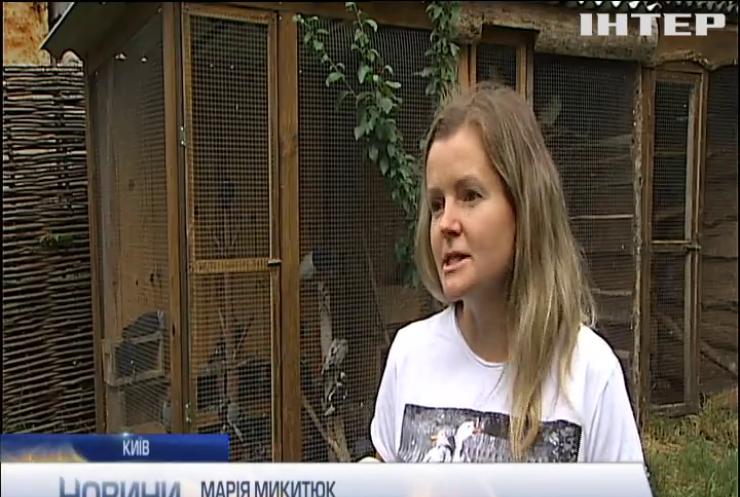 Сезон гніздувань в Україні: чи варто рятувати самотнє пташеня