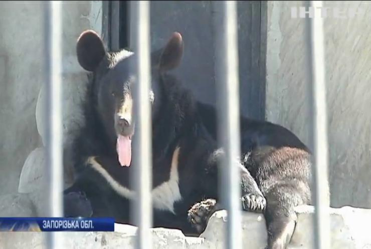 У добрі руки: реабілітаційний центр виставив левів та ведмедів на аукціон