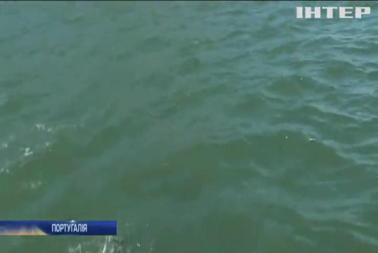Переваги карантину: у річці Лісабону помітили дельфінів