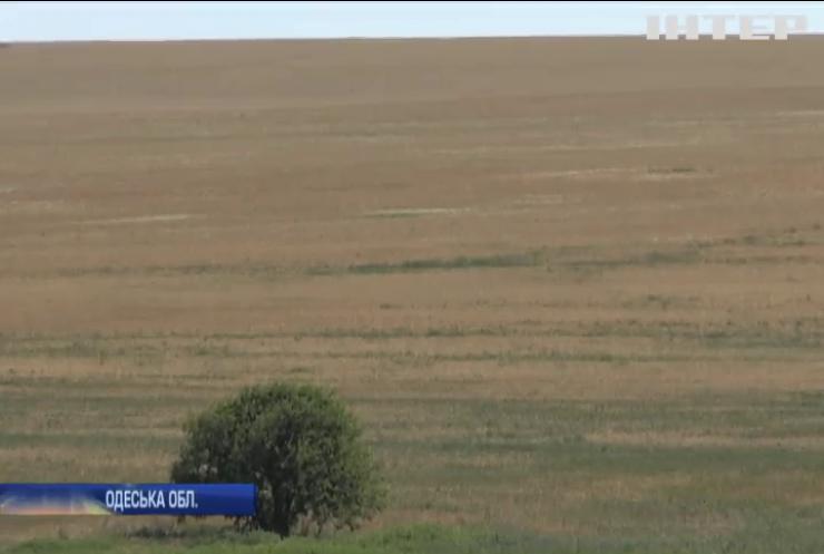 Аграрії Одещини не отримали допомоги від влади: чим це загрожує
