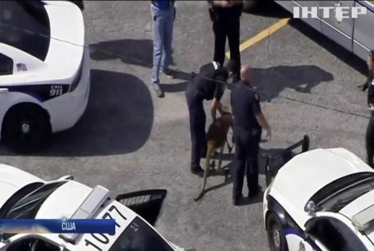 У штаті Флорида поліція затримала кенгуру