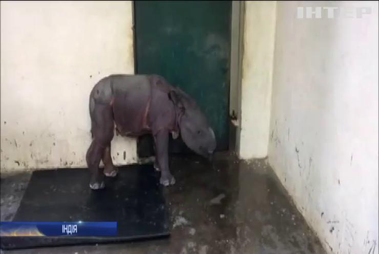 В Індії врятували від загибелі дитинча рідкісного носорога