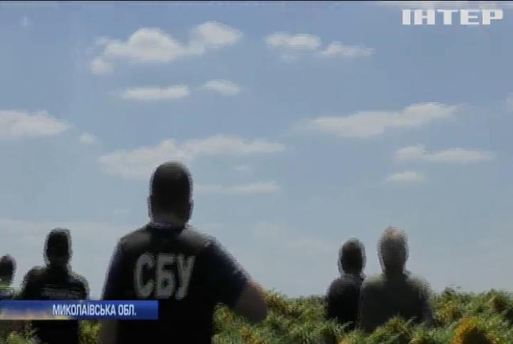 На Миколаївщині соняхи сховали гігантське поле коноплі