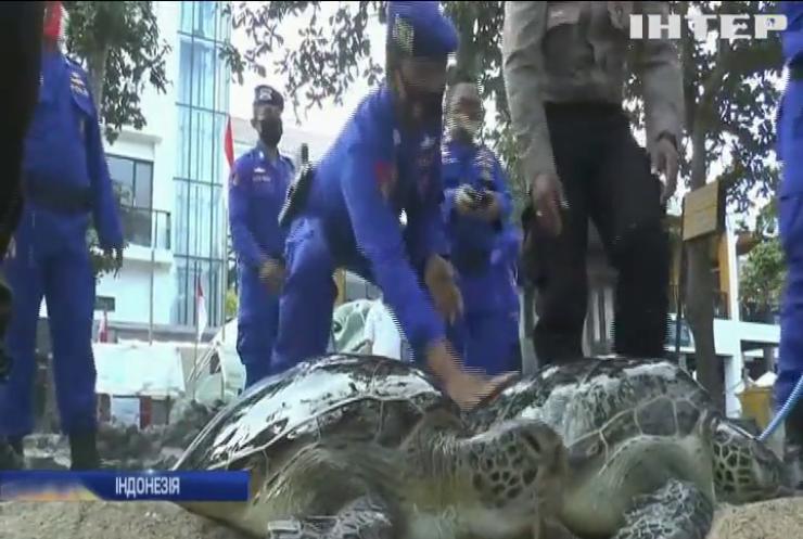 В Індонезії зоозахисники випустили на волю рідкісних зелених черепах
