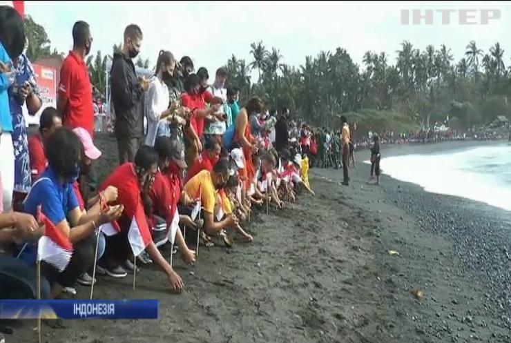 На Балі в океан випустили тисячі рідкісних черепашенят